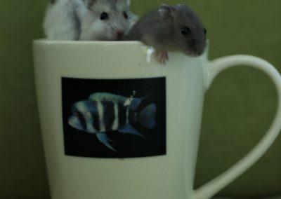 kisemlősök